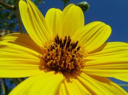 Greek Yellow