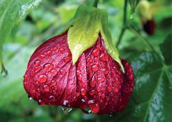 Very Wet Flower