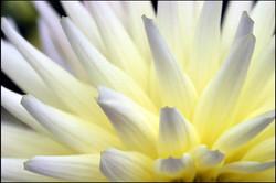 Computer Coloured Flower 05