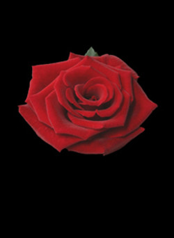 The Rose_