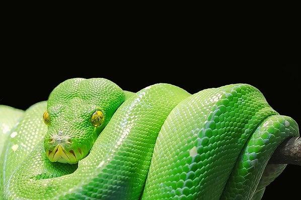 snake-543243_640.jpg