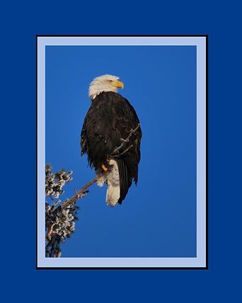 eagle.tif