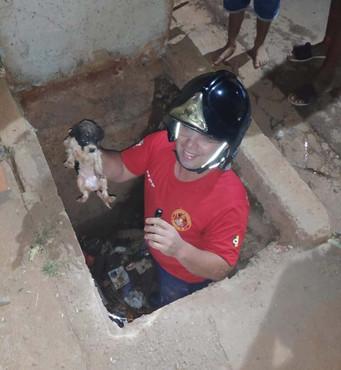 Defesa Civil salva cachorro preso em galeria pluvial