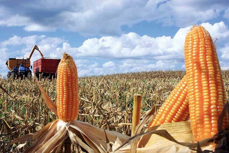Terras para lavoura estão valorizadas.  (Texto: Igor Sorente. Foto: Cleverson Beje/FAEP)