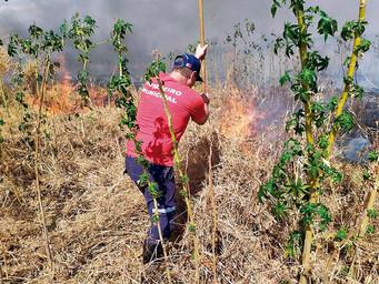 Vinte e sete focos de incêndio foram combatidos pela equipe da Defesa Civil desde o início do ano