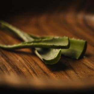 Aloe Vera(Aloe Barbadensis)