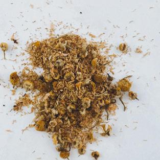 Chamomile (Chamomilla Recutita)