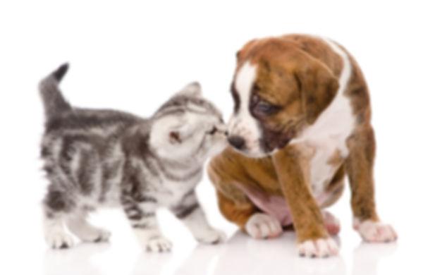 Щенок и котенок.jpg