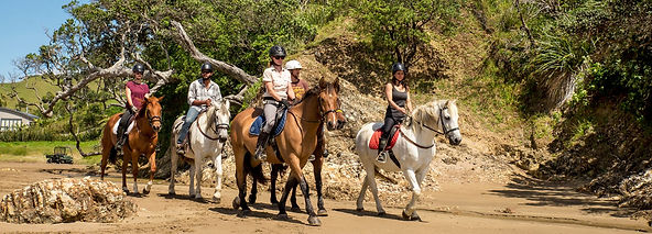 Secluded Beach Trail - Sandy Bay Horses