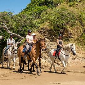 Horse Trekking - Sandy Bay Horses - Tututkaka Cost NZ