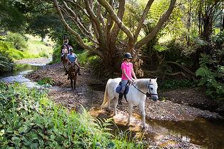 Stream Vally Trail Ride - Sandy Bay Horses