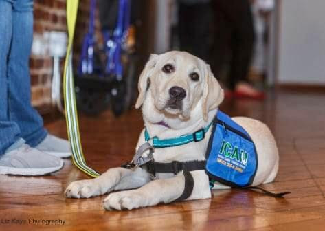 Wine & Wags benefits service dogs