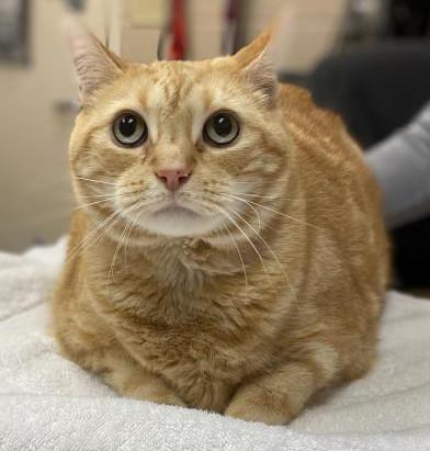 I'm Garfield! Adopt me!