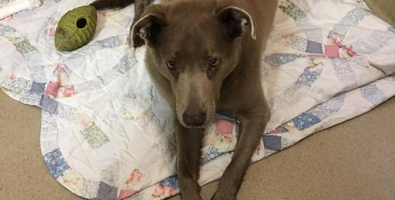 Rescue helps Chloe on difficult journey to new furever home