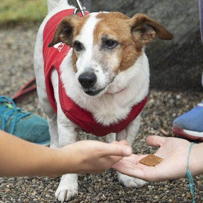 IndyHumane offers youth and family activities