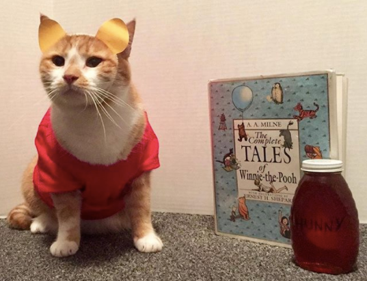 Library kitty is a costumed hit on social media!