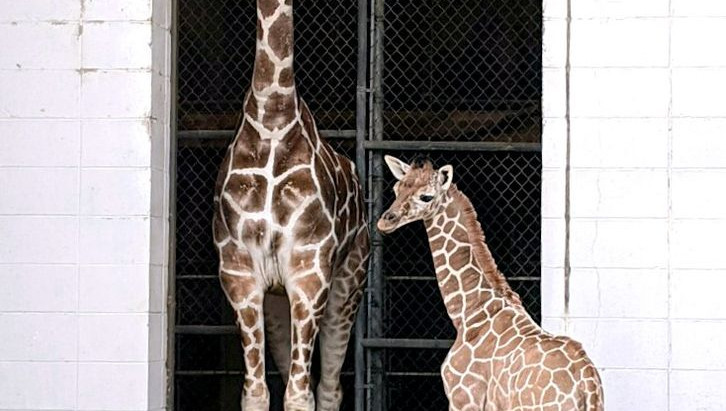 Help select a name for Zoo's baby giraffe!