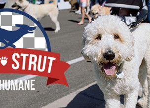 IndyHumane's Mutt Strut reaches fundraising goal!