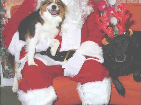 Pet Pics with Santa benefits Rushville shelter