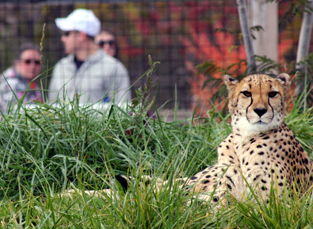 Zoo to reopen June 19 with new protocols