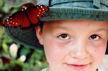 Butterflies return to Indy Zoo!