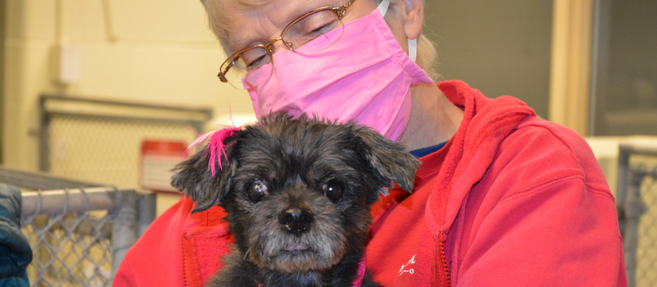 IndyHumane volunteer recognized for 15 years on the job