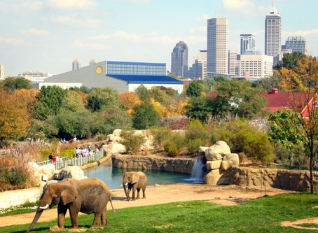 Big events planned at Indy Zoo!