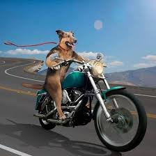 Date change: Hogs for Dogs will ride Oct. 17 to benefit rescue