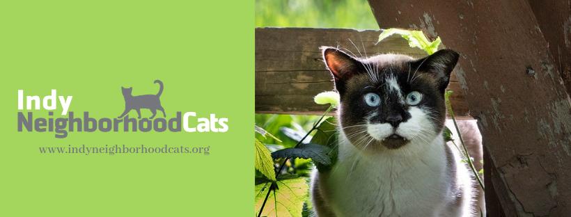 Guidelines for feeding feral kitties