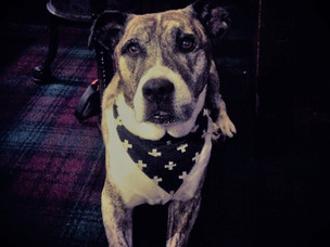 Chester Copperpot: Senior pup is back home again