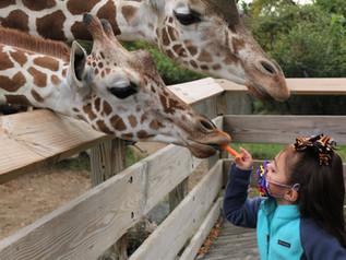 Zoo accreditation spans four decades