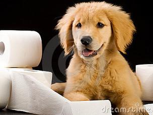 Consistency is key in housebreaking your puppy