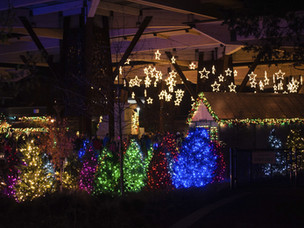 Vote for IndyZoo for best Christmas lights!