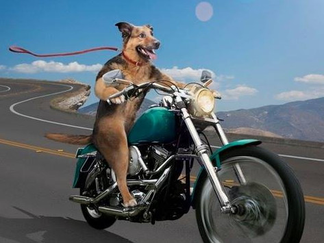 Hogs for Dogs ride benefits Lil' Bit of Heaven