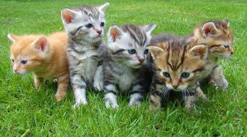 Online 'Kitten Shower' for Boone County shelter