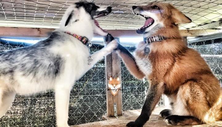 Facebook Live event to benefit animals
