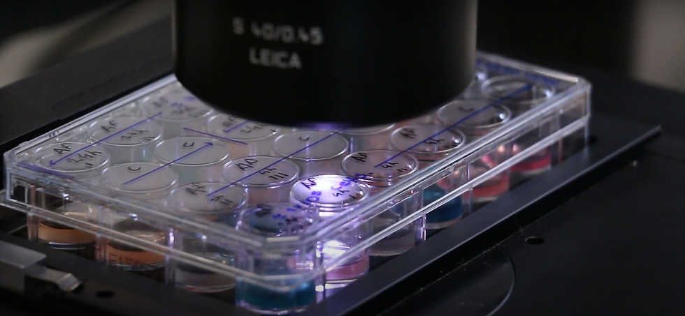 Cell culture microscope.png