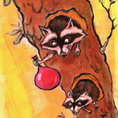 Raccoon Fun