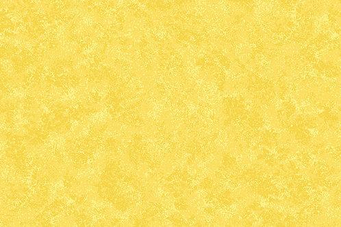 Daffodil Y82