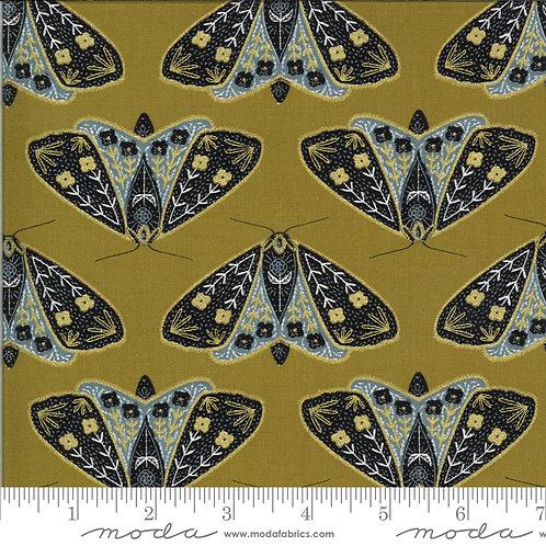 Dainty moth umber