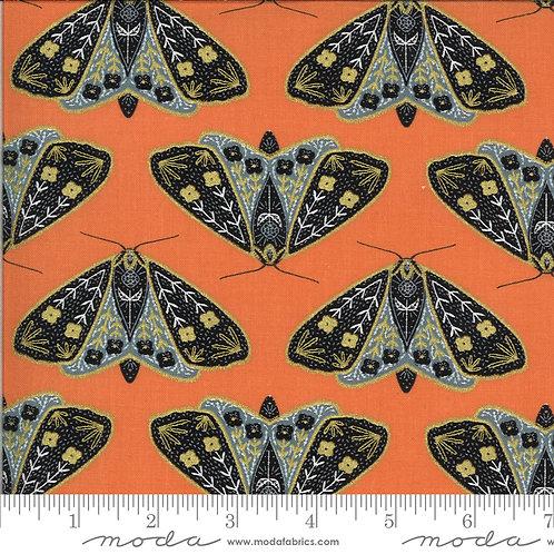 Dainty moths poppy