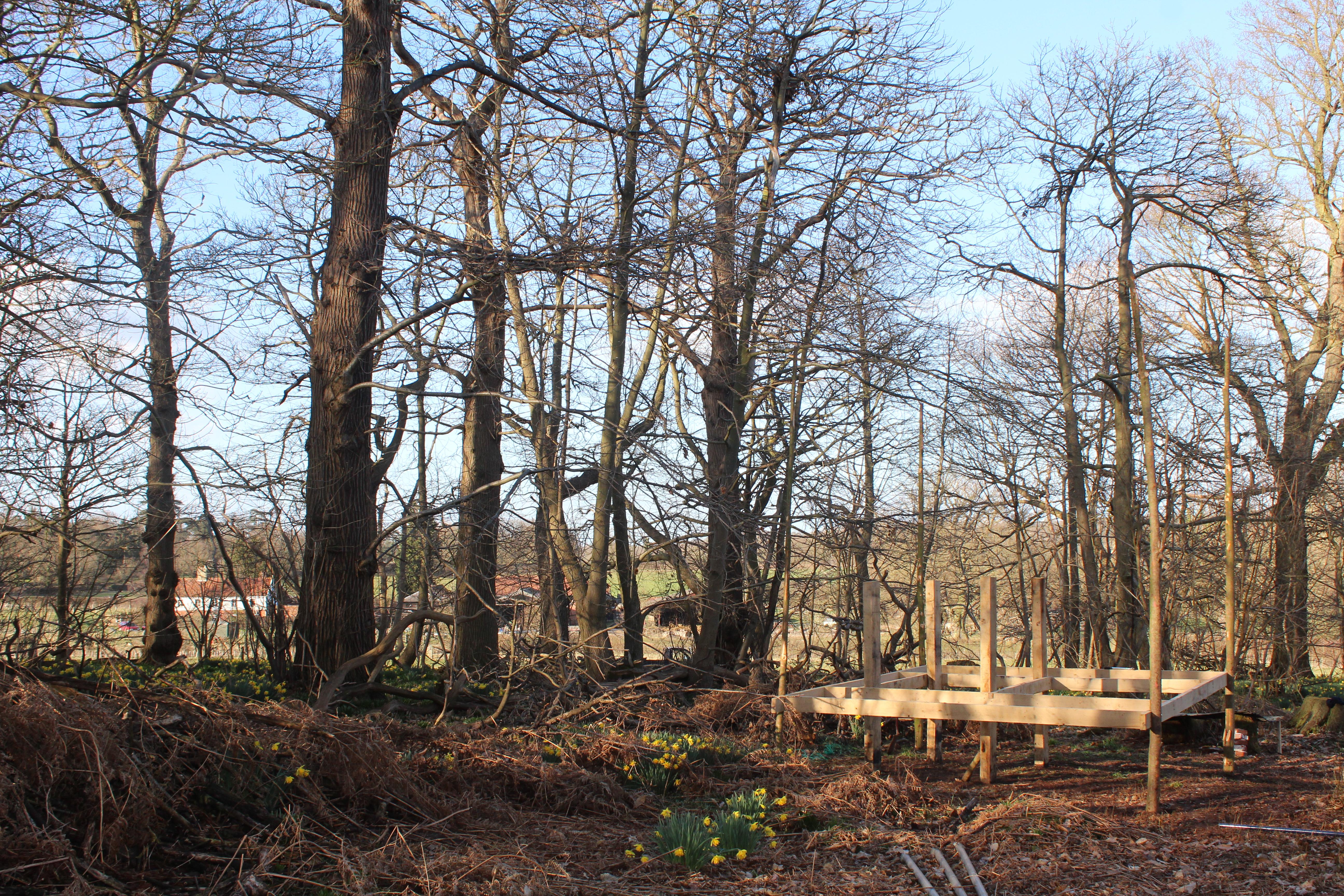 Woodland hut