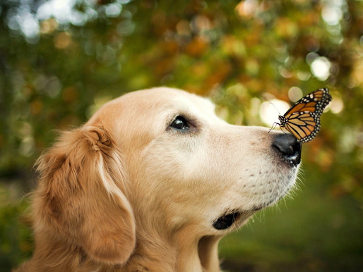 An Animal Friend's Obligation-Sustainability