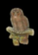 bird-1758772_640.png