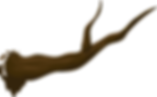 branche-576867_640.png