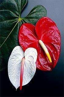 Na natureza tem amor, inclusive nas formas