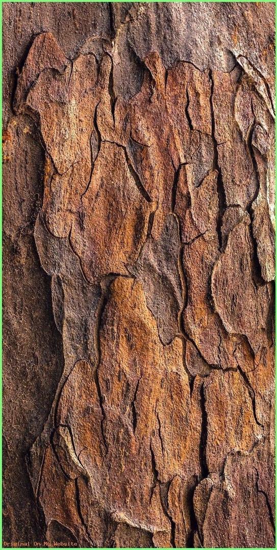 as raízes e as cascas ficam mais fortes