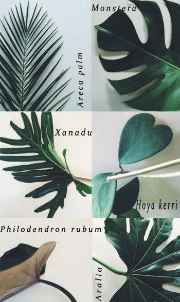 espécies de plantas