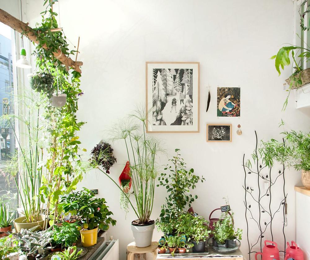 plantas diversificadas no ambiente