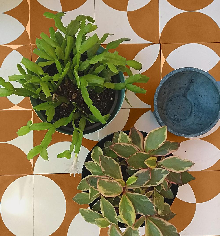 Vasos de plantas com ladrilho hidráulico